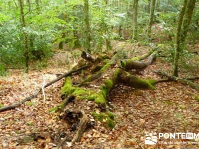 Cañones y nacimento del Ebro - Monte Hijedo;rutas faciles senderismo madrid;fotos de senderismo